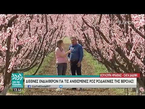 Μέσα στις ανθισμένες ροζ ροδακινιές της Βέροιας! | 22/03/19 | ΕΡΤ