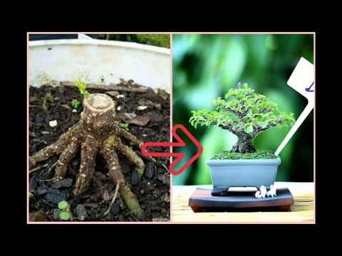 Élő egészséges paraziták hogyan lehet eltávolítani