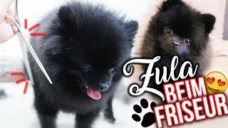 Mit ZULA beim Friseur ✂️? ( Pomeranian ) | Dagi Bee
