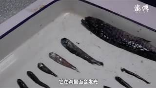 Antarctic expedition team on China's Xuelong icebreaker catches deep-sea fish