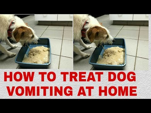 How To Treat Dog Vomiting At Home !! In Hindi !! Dog Ultimate Care