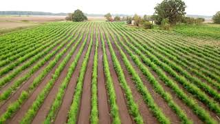 Meidukis The Asparagus Farm