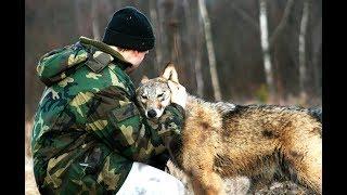 Волчица по имени Дайя. Очень трогательный фильм