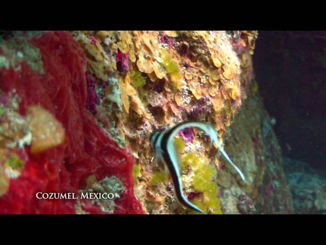 Cozumel Dive preview: Santa Rosa Wall, Paradise Reef, Palancar, Tunich