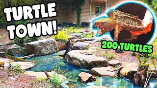 *200 TURTLES* in 1 AWESOME Turtle Haven!