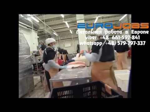 Работа на рыбзаводе Польша EuroJobs