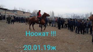 👍Күчтүү Аттар коп кирди бүгүн, 300000 сом дегендери да бар Ноокат, 20.01.2019жыл.