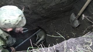 Как правильно ловить барсука и чем