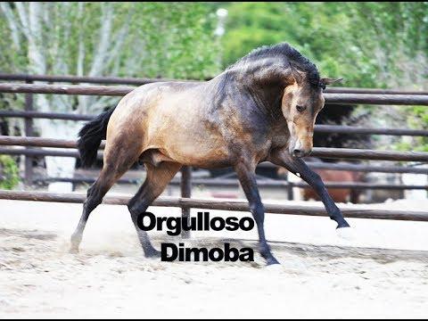 Orgulloso Dimoba - Mayo 2018