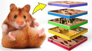 Labyrinthe à 5 Niveaux Pour Hamsters 🐹