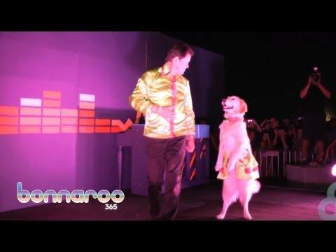 קארי - כלבת הריקודים הקאריביים!