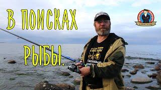 Ловля рыбы в сосновом бору на сбросе
