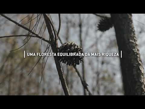 O Papel do Pinhal na Floresta Portuguesa - A Visão do Centro PINUS
