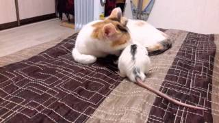 Дружба кошки и мышки