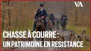 Chasse à courre : un patrimoine entré en résistance