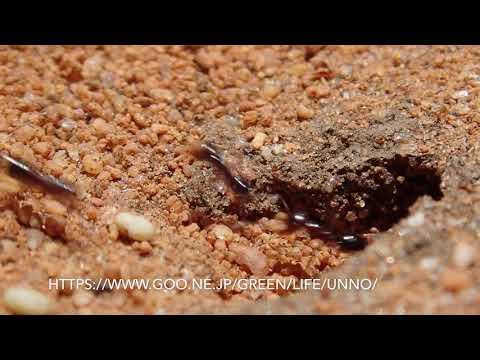 アリの巣の入り口 The entrance of the ant nest