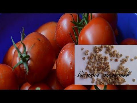 , title : 'Семена томатов.  Как подготовить семена для посадки?