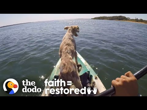Dog Abandoned On A Desert Island Rescued | The Dodo Faith=Restored