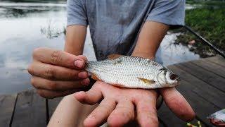 Ловля рыбы на оке калуга