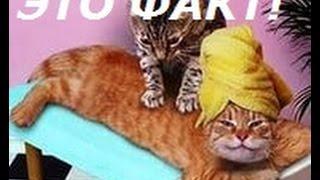 Прикольные животные. Кошки массажистки