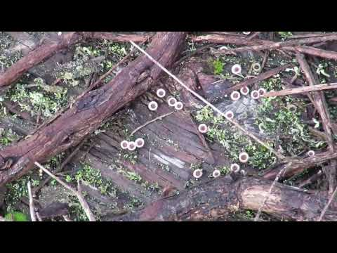 Salves fungus paa