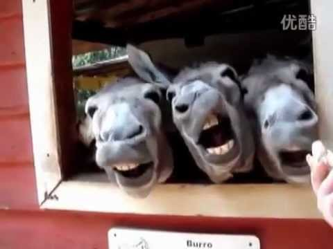 10 Animals That Will Make You Laugh!