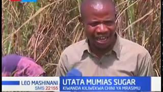 Utata Mumias Sugar: Wakazi walalamika kukatwa kwa miwa kabla kiwanda kufunguliwa
