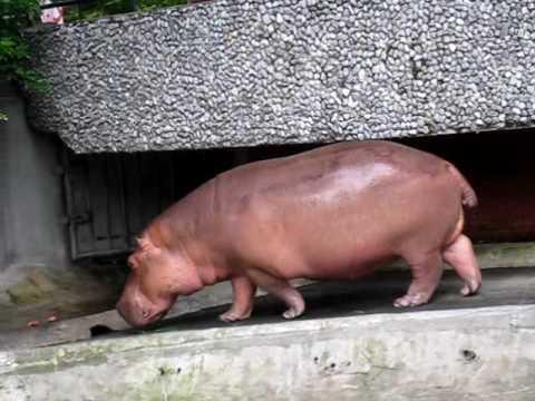 Dieren in de Dusit Zoo