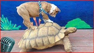 смешные животные и природа 4# наш bbs
