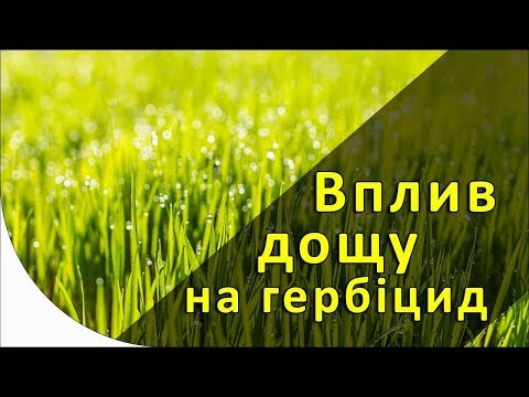 Влияет ли дождь на эффективность гербицидов?