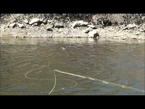 Dry Fly fishing on the Provo