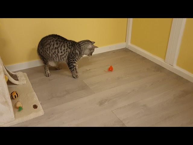 Vorschau: Porta Maus