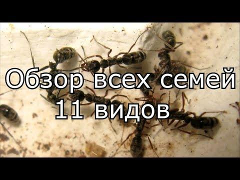Обзор всех семей. 11 видов муравьев.