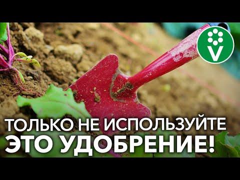 Какие УДОБРЕНИЯ ВНОСИТЬ ОСЕНЬЮ для повышения плодородия почвы?