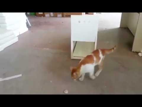Video Galeri 0