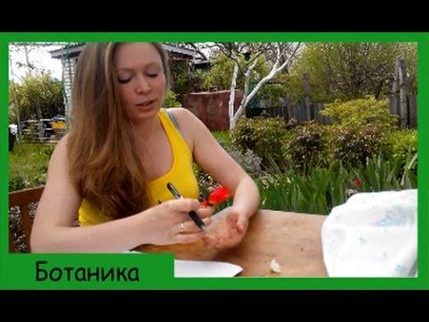 Рецепт из тыквенных семечек для лечения простатита