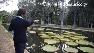 preview picture of video 'Jardin de pamplemousses parc botanique ile maurice'