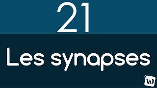 Vignette de Le rôle primordial des synapses