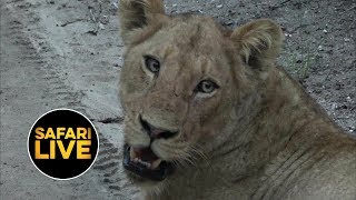 safariLIVE - Sunrise Safari - February 1, 2019