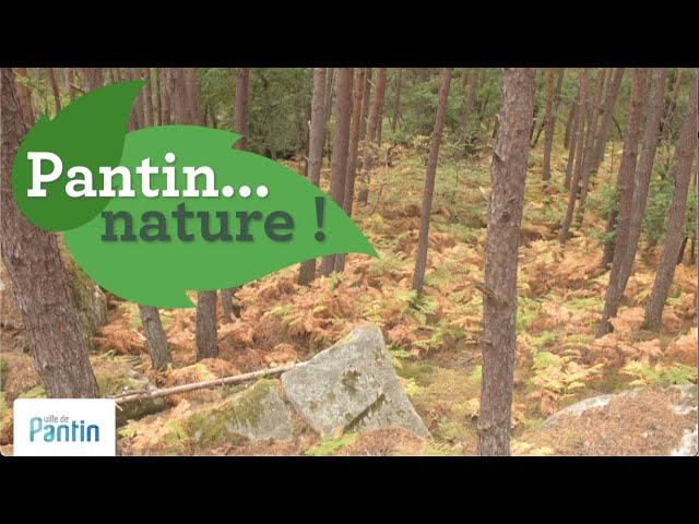 Pantin...nature ! Sorties Maisons de quartier, 2020