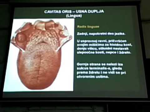 Hipertenzija sve o bolesti