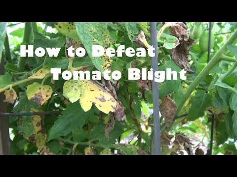 , title : 'How to Defeat Tomato Blight