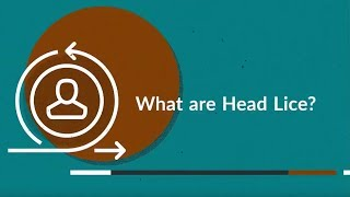 What are Head Lice? (Treatment, Symptoms, Causes, Prevention)