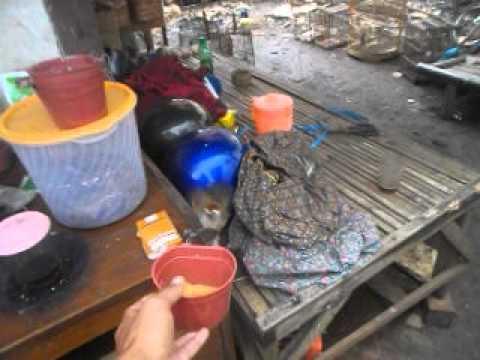 Video burung robin kembang jinak 1