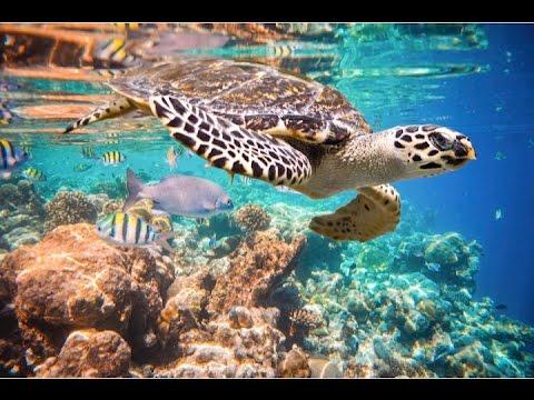 Riviera Maya Tours & Excursions – Snorkel in Akumal & 3 cenotes