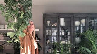 Low Light Hanging Plants |  Design Tips & Tricks!