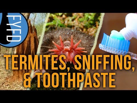 Learn how termites are inspiring new building designs, how the star-nosed mole can sniff underwater, and what goes into making your toothpaste!