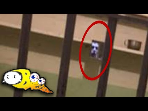 Ghost Caught on Camera at Alcatraz!? | The Boo Review