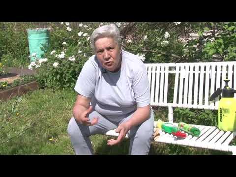 Инструкция по применению порошка пиретрум