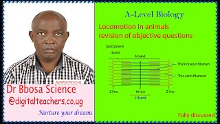 Locomotion in animals revision of objective questions